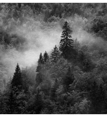 Autumn mist on the forest Sticker