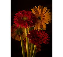Daisy Reflection Photographic Print