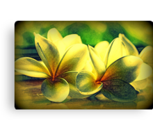 Painted Frangipanis - Still Life Canvas Print