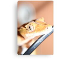 Reptiles eyes tell a story Canvas Print
