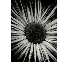 Center Photographic Print