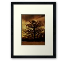 Evening Tree Hugs Framed Print