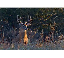 Morning Breath - White-tailed deer Photographic Print