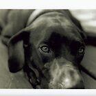 Man's Best Friend by lorenvictoria