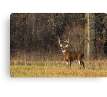 Grace and Poise - White-tailed deer Canvas Print