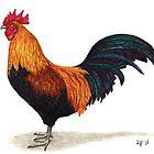 Rooster by LFurtwaengler