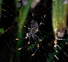 Spider by LeJour