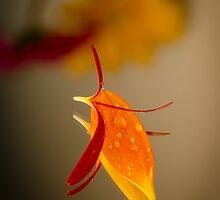 Petal Reflection II by GLibby