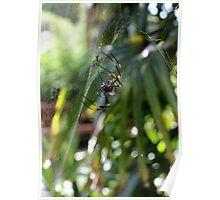 Spider (2) Poster