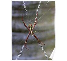 St Andrew's Cross Spider (2) Poster