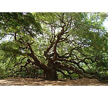 Angel Oak, John's Island S Carolina Photographic Print