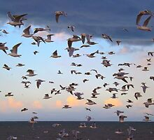 Dungeness Bay Flock of Seagulls by Moonamie