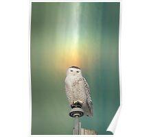 Snowy Owl And Aurora Borealis Poster