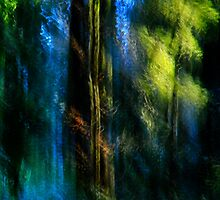 Wind by Angelika  Vogel