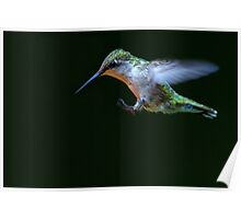 Incoming - Ruby-throated hummingbird Poster