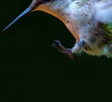 Incoming - Ruby-throated hummingbird Sticker