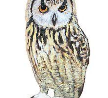 Alternative Owl by Antony R James