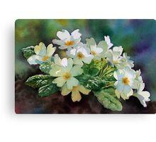 Backlit Primroses Canvas Print