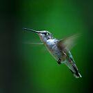 Green Lantern - Ruby-throated hummingbird by Jim Cumming