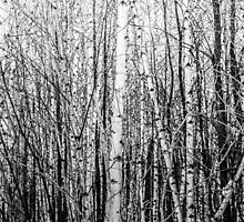 Monochrome Forest / Forêt monochrome by maophoto