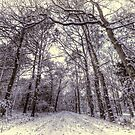Winter Forest Path by Nigel Bangert