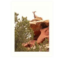 Big horn in Sink Canyon Art Print