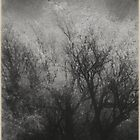 trees i left behind by Jill Auville
