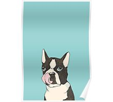 Hungry Boston Terrier (Black) Poster