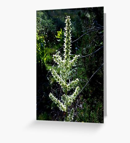 Blooming Swamp Onion Greeting Card