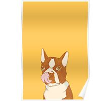 Hungry Boston Terrier (Red) Poster