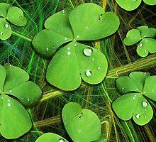 Shamrocks with Dew Drops Pattern by BluedarkArt