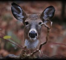 Oh Rut Roh by Tim Holmes