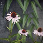Coneflowers by Mohini Patel Glanz