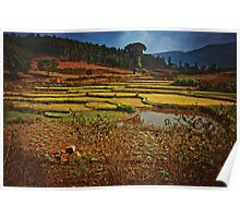 Rice field Poster
