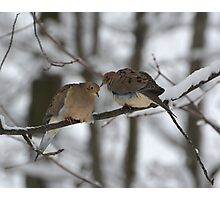 Two Mourning Doves in Winter Photographic Print