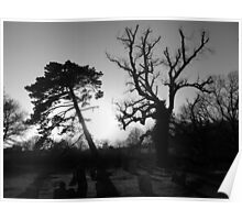 Trees in the Churchyard Poster