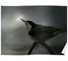 Nuthatch Awaiting the Sun Poster