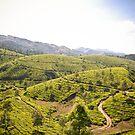 Tea Gardens by Th3rd World Order
