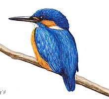 Kingfisher by LFurtwaengler