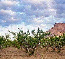 The Palisades Peach Groves by RondaKimbrow