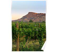 Western Colorado Wine Vineyards Poster