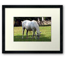 Plantation Horse Framed Print