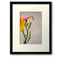 springs best Framed Print