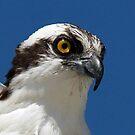 Osprey profile 2 by jozi1