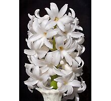 White Hyacinth  Photographic Print