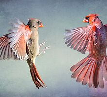 Dance of the Redbirds by Bonnie T.  Barry