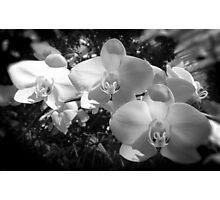 BW orchids Photographic Print