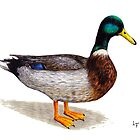 Duck by LFurtwaengler
