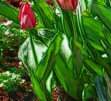 Red Tulips by vigor