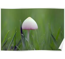 A tiny white mushroom hiding in the grass Poster